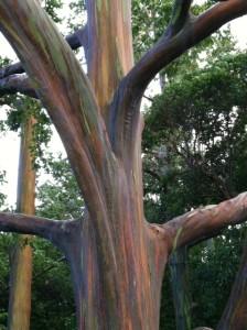 trees-of-forbearance-2--weekly-lightblast-jamye-price