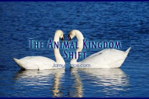 The Animal Kingdom Shift Article by Jamye Price